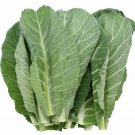 HEIRLOOM NON GMO Morris Heading Collards 100 seeds
