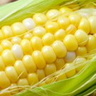 HEIRLOOM NON GMO True Gold Sweet Corn 25 seeds