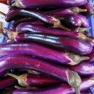 HEIRLOOM NON GMO Astrakom Eggplant 25 seeds