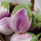 HEIRLOOM NON GMO Rosa Bianca Eggplant 25 seeds