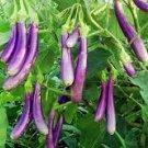 HEIRLOOM NON GMO Kashmiri Brinjal Eggplant 25 seeds