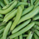 HEIRLOOM NON GMO Thai Long Green Eggplant 25 seeds
