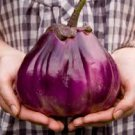 HEIRLOOM NON GMO Ukrainian Beauty Eggplant 25 seeds