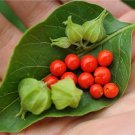 HEIRLOOM NON GMO Ashwagandha Garden Berry 25 seeds