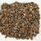 HEIRLOOM NON GMO Buckwheat 100 seeds