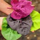 HEIRLOOM NON GMO Orach, Aurora Mixed 100 seeds