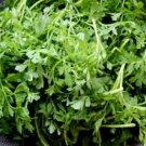 HEIRLOOM NON GMO Pepper Cress 100 seeds