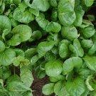 HEIRLOOM NON GMO Tatsoi Green 100 seeds