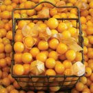 Aunt Molly's Ground Cherry 25 seeds