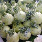 HEIRLOOM NON GMO Early White Vienna Kohlrabi 50 seeds