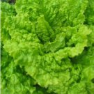 HEIRLOOM NON GMO Australian Yellow Lettuce 100 seeds