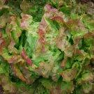 HEIRLOOM NON GMO Bronze Beauty Lettuce 100 seeds