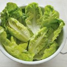 HEIRLOOM NON GMO Little Gem Lettuce 100 seeds