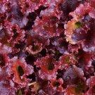 HEIRLOOM NON GMO Lollo De Vino Lettuce 100 seeds
