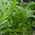 HEIRLOOM NON GMO Oak Leaf Lettuce 100 seeds