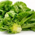 HEIRLOOM NON GMO Syrian Green Lettuce 100 seeds