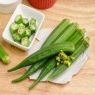 HEIRLOOM NON GMO Perkin's Long Pod Okra 25 seeds