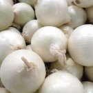 HEIRLOOM NON GMO Southport White Globe Onion  50 seeds