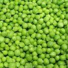 HEIRLOOM NON GMO Improved Maestro Garden Pea 25 seeds