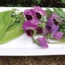 HEIRLOOM NON GMO Mammoth Melting Sugar Snow Pea 25 seeds