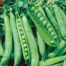HEIRLOOM NON GMO Sugar Ann Snap Pea 25 seeds