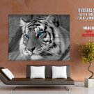 Black White Tiger Blue Eyes Wild Cat Giant Huge Wall Print Poster