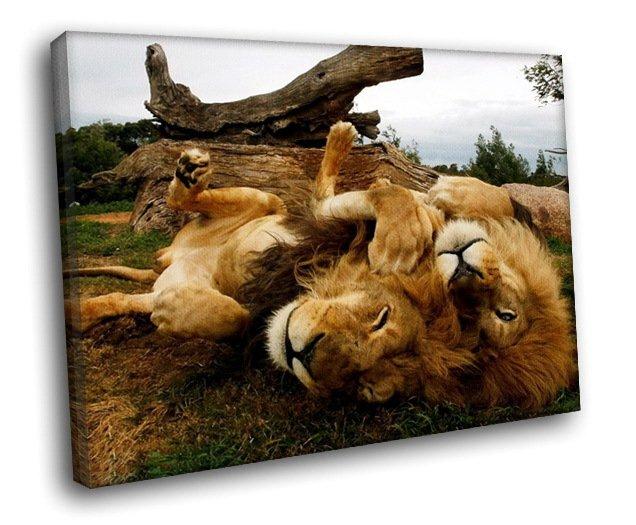Savanna Lions Wild Animals 40x30 Framed Canvas Art Print