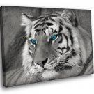 Blue Eyed White Tiger Wild Animals 50x40 Framed Canvas Art Print