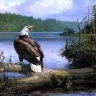 Beautiful Amazing Painting Art Bald Eagle Landscape 16x12 Print POSTER