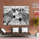 Zebra Face To Face African Animals Safari Black White Giant Huge Print Poster
