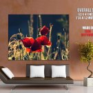Flowers Red Poppies Buds Nature Field Summer Giant Huge Print Poster