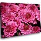 Pink Marguerite Crown Daisy Flowes 50x40 Framed Canvas Art Print