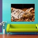 Leopard Wild Cat Autumn Cutie 47x35 Print Poster