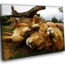 Savanna Lions Wild Animals 30x20 Framed Canvas Art Print