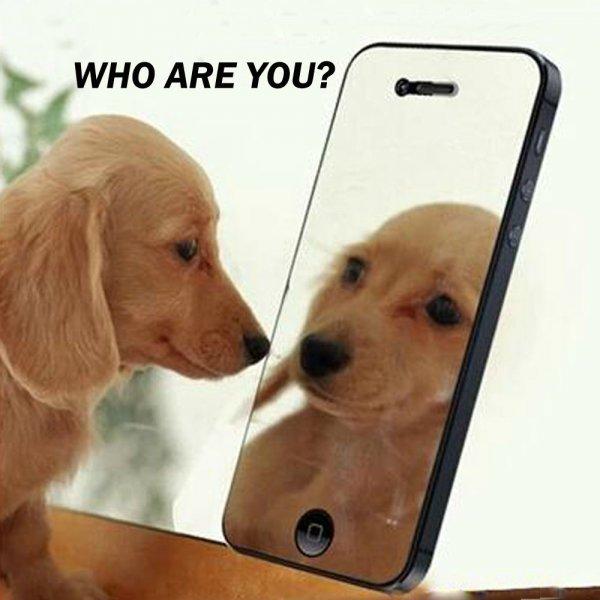 "PET Mirror Screen Protector Film for 5.5"""" iPhone 6 Plus/iPhone 6S Plus"