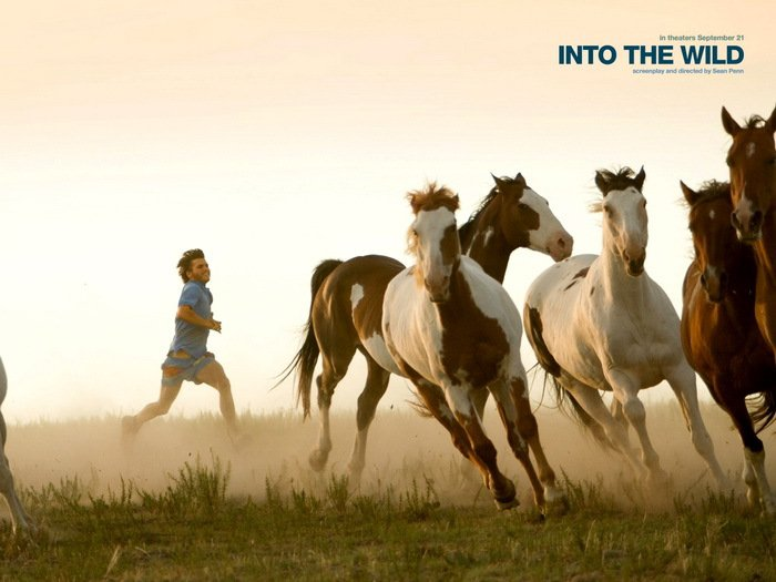 Into The Wild Horses Movie 24x18 Print Poster