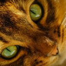 Beautiful Cat Animal Eyes 24x18 Print Poster
