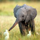 Cute Elephant Kid National Geographic 24x18 Print Poster