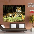 Tiger Cub Wild Cat Nature Animals Huge Giant Print Poster