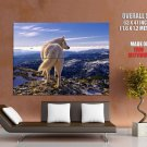 White Wolf Highlands Wild Nature Animals Huge Giant Print Poster