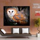 Golden Barn Owl Bird Nature Animals Huge Giant Print Poster