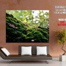 Macro Mushrooms Moss Beautiful Nature Huge Giant Print Poster