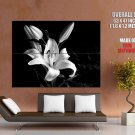 Lilium Lily Flower Beautiful Macro Bw Huge Giant Print Poster