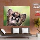 Cougar Mountain Lion Wild Cat Animal Nature GIANT 63x47 Print Poster