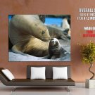 Sea Lions Mother Baby Animal Wild Nature GIANT 63x47 Print Poster