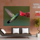 Hummingbird Macro Flower Nature Bird GIANT 63x47 Print Poster