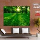 Green Grass Sunlight Trees Huge Giant Print Poster