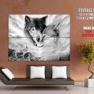 Wolf Family Art Wild Dogs Huge Giant Print Poster