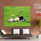 Small Cute Puppy Playing Ball Dogs Huge Giant Print Poster