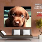 Cute Brown Puppy Eyes Dogs Huge Giant Print Poster